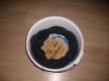 marmite_010